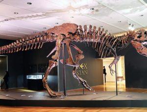 'Dünyada 2,5 milyar T-rex yaşadı'